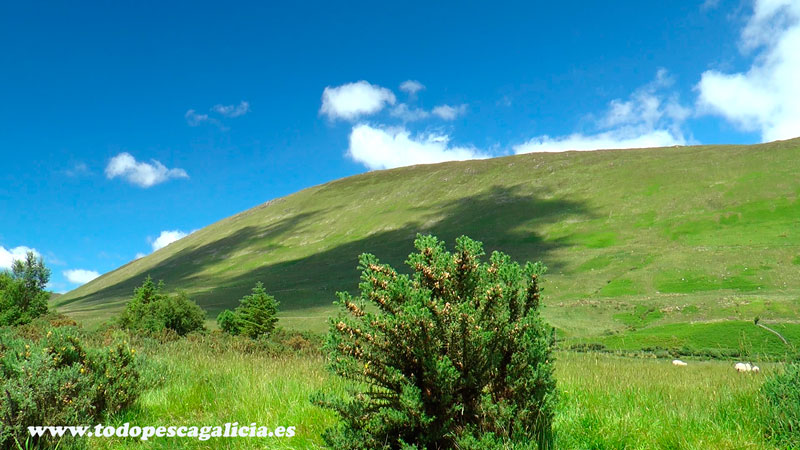 panorámica-montaña-verde
