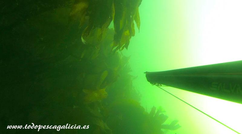 primera-picada-algas